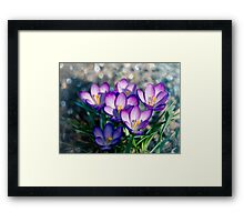 Crocus is the present of spring. Framed Print