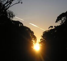 Jet Stream At Sunset by Gregory John O'Flaherty