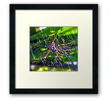 Oh What A Tangled Web We Weave! Framed Print