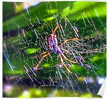 Oh What A Tangled Web We Weave! Poster