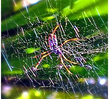 Oh What A Tangled Web We Weave! Photographic Print