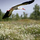 Flight Of The Stork by Alexandr Zadiraka