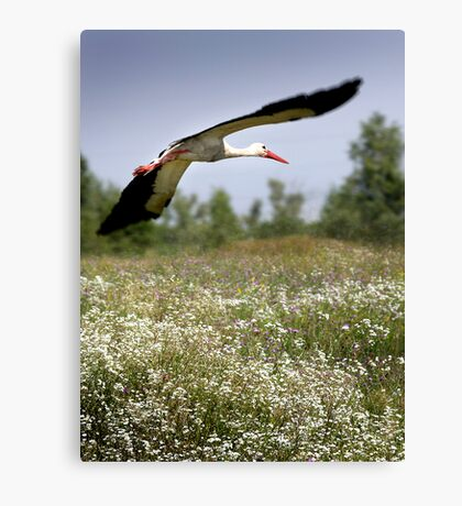 Flight Of The Stork Canvas Print