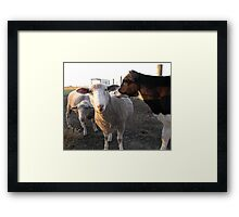 What, Hello, Okay Framed Print