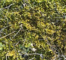 Spring Moss, Little Green Plants, Organic Textural by M Sylvia Chaume