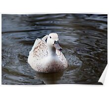 White Duck Poster