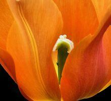orange flame by VickiOBrien
