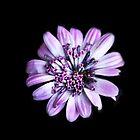 Pretty Purple by heatherfriedman
