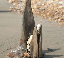 Driftwood Beach  by Alixzandra