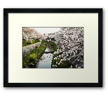 Cherry Blossoms in Nagoya Framed Print