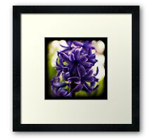 hyacinth TtV Framed Print