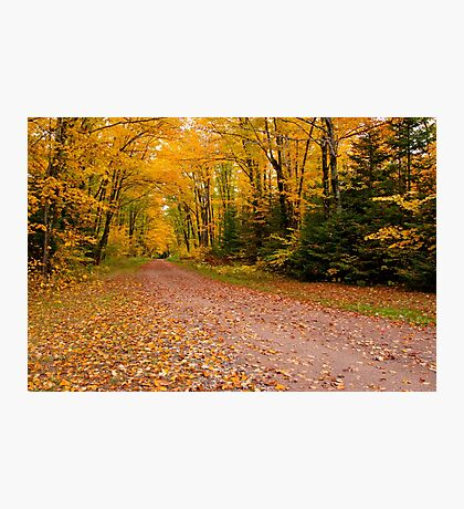 Yellow fall Driveway Photographic Print