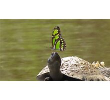 River Turtle Tortuga Poqueña, Adult Photographic Print
