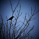 Bird in a Tree by amandameans