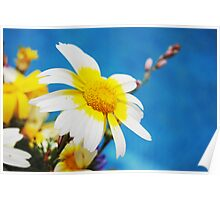 Two Tone Daisy Poster