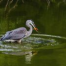 Water Birds of Ontario, Canada by Gerda Grice