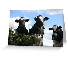 Bovine buddies Greeting Card