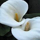 Cala Lily Duo by Gloria Abbey