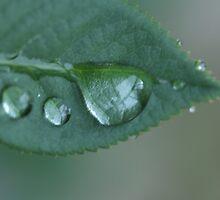 Precious Droplets by Urbanfringe