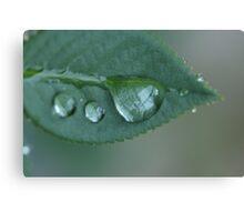 Precious Droplets Canvas Print