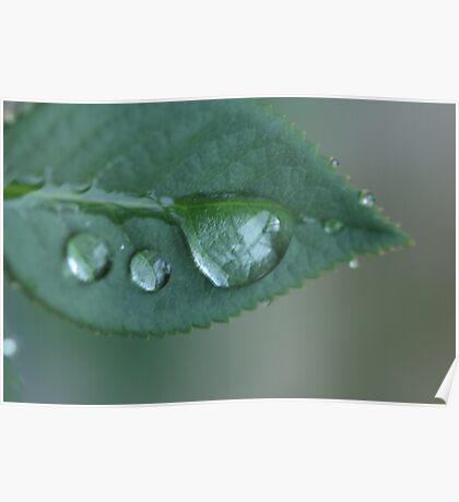 Precious Droplets Poster
