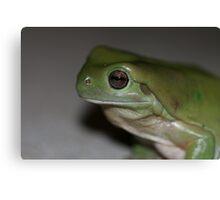 Green Croaker Canvas Print