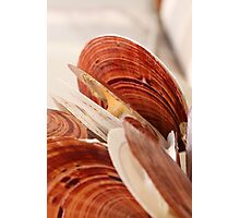 Sea Scallops Opening Photographic Print