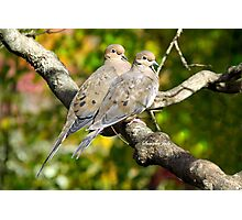Sweethearts ~ A Pair of Doves Photographic Print