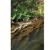 Beneath the surface I Photographic Print