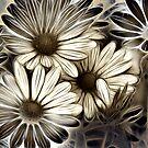 African Daisies by Kelly Cavanaugh
