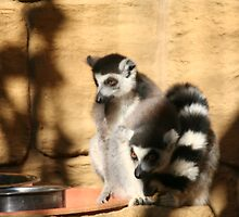 Ring Tailed Lemurs by tammyins