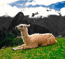 Machu Picchu Llama by Nicolas Raymond