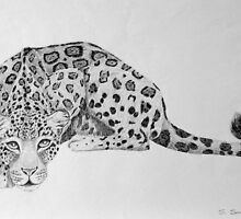 Jaguar by sally seabright
