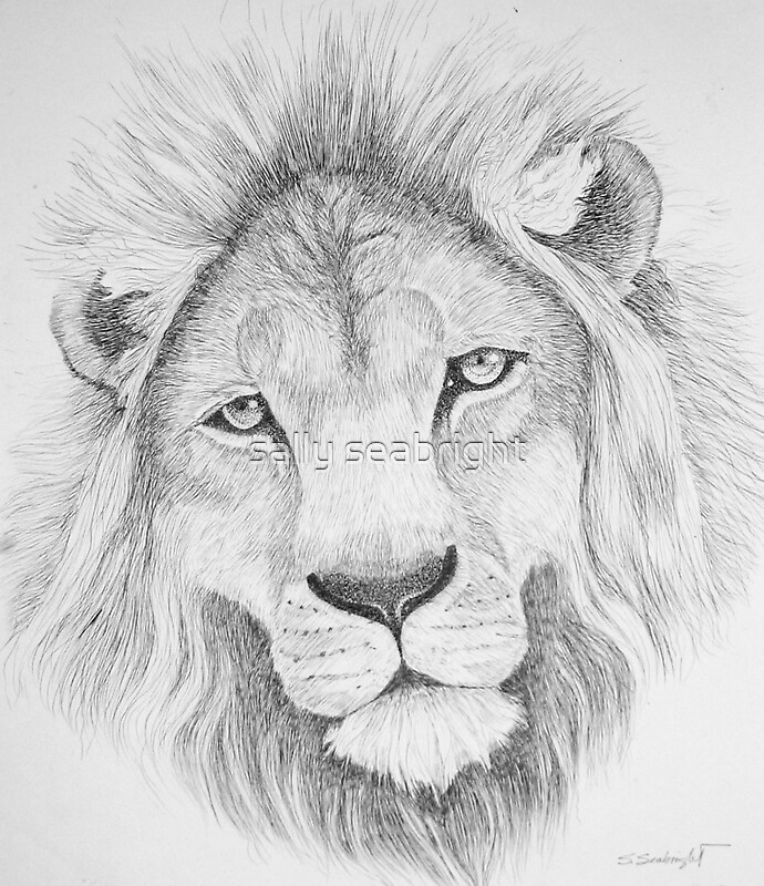 Similar Galleries: Lion Drawing , Lion Face Pencil Drawing ,