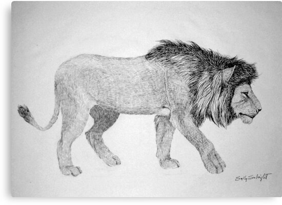 Lion #2 by sally seabright