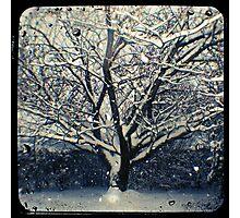 Winter Cherry Tree TtV  Photographic Print