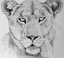 Lioness Head by sally seabright