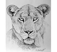 Lioness Head Photographic Print