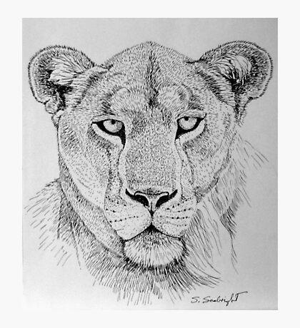 Lioness Head Photographic Print