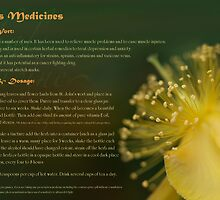 Herbs as Medicines- St John's Wort by cdwork