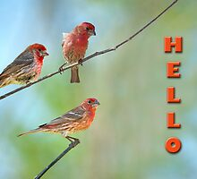 Hello from the Finch Family by Bonnie T.  Barry