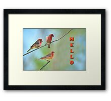 Hello from the Finch Family Framed Print
