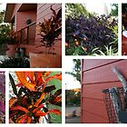 Autumn in my garden by Maria Catalina Wiley