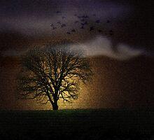 A Tree in Eden by Judi Taylor