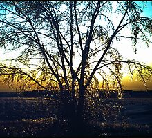 ICE STORM IN North Dakota...............1983 by davesdigis