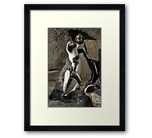 Penguin Call Framed Print