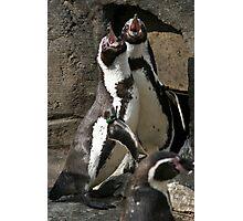 Penguin Call Photographic Print