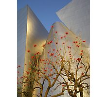 coral tree & disney concert hall Photographic Print