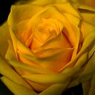 Yello by salsbells69