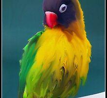 Parrot in the Backyard by Gehan Morsy